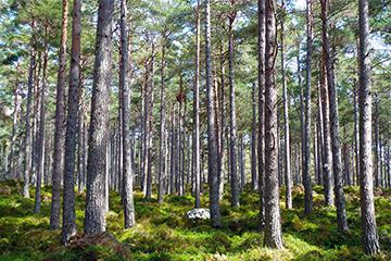 Waldgrundstücke | Holzhandlung Lockinger